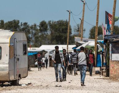 """Migranci atakują kierowców w Calais. """"Sytuacja wymknęła się spod kontroli"""""""