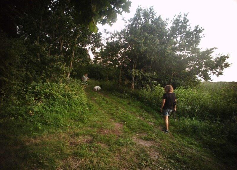 Spacer z psami w pasie granicznym zakończył się mandatami