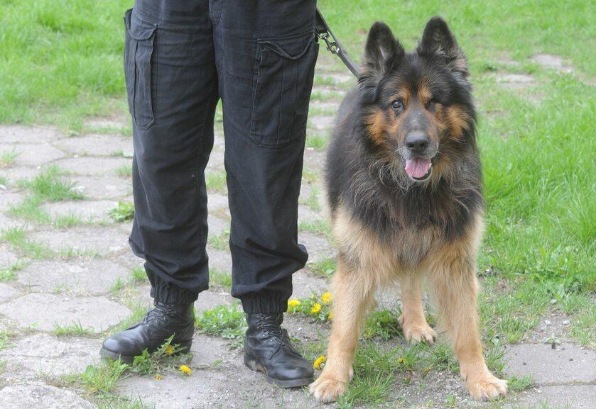 Pies policyjny, zdj. ilustracyjne