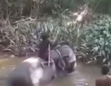 Bestialskie znęcanie nad słoniem. Na opublikowanym nagraniu zwierzę...