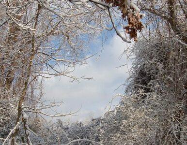 W Rosji spadł... czarny śnieg