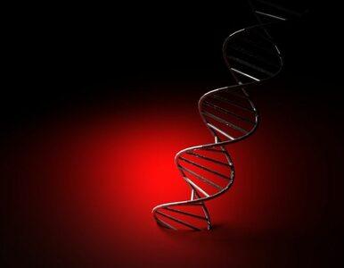 Uczeni zanalizowali genom wymarłych krewniaków człowieka