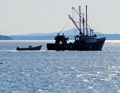 Polscy rybacy łowią za dużo śledzi
