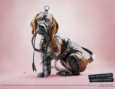 Zwierzęta w strojach BDSM. Oburza cię to? O to chodziło