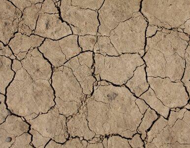 USA: największa susza od 1956 r. Państwo udzieli pomocy za 383 mln dolarów
