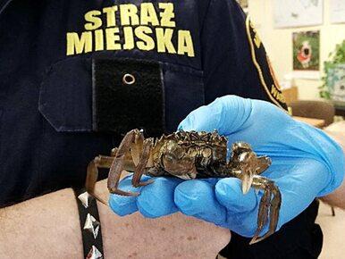 Mieszkanka Warszawy znalazła w swojej łazience... kraba. Jak się tam...