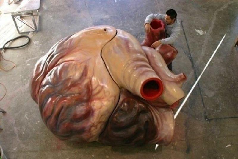 Model serca płetwala błękitnego w skali 1:1