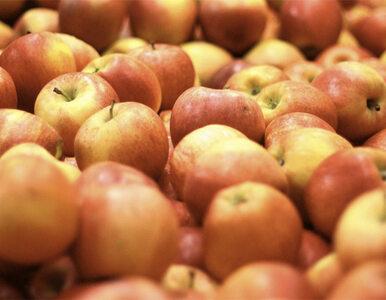 Polskie jabłka kończą w Rosji