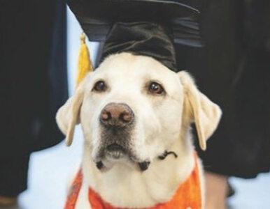 Ten pies ma doktorat. Doceniono jego wkład w pracę uniwersytetu