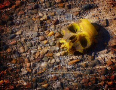 Iran: odnaleziono szkielet człowieka. Ma 7500 lat