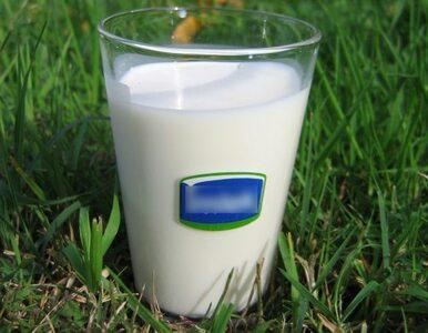 Ośle mleko nadzieją dla alergików