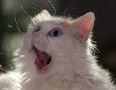 Kot otrzymał wniosek o dopisanie do listy wyborców. Nie żyje od 12 lat
